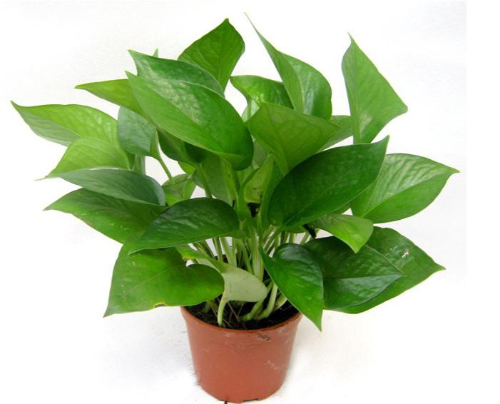 E - Nature curiosity stressed out plants emit animal like signals ...